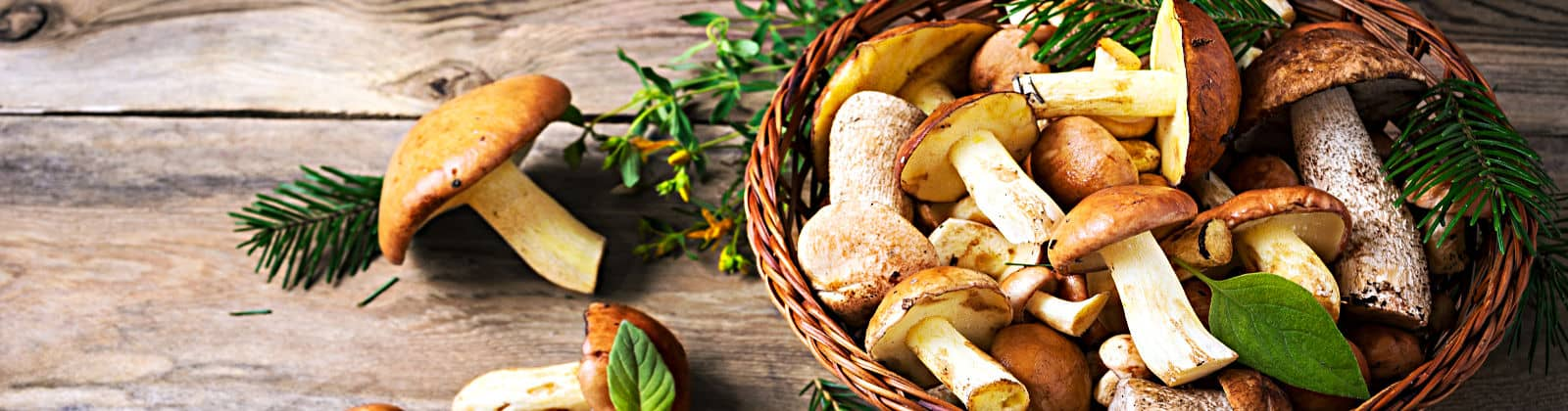 fricassee de champignons sauvages